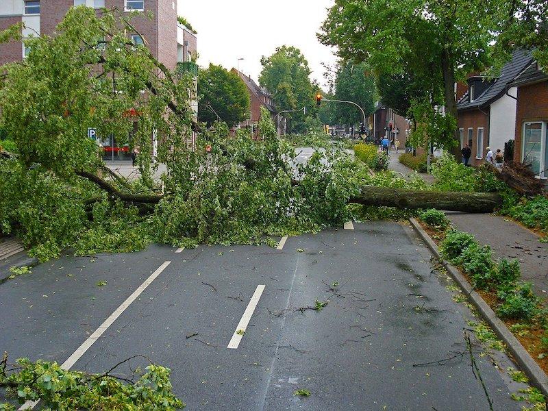 fallen tree after a storm